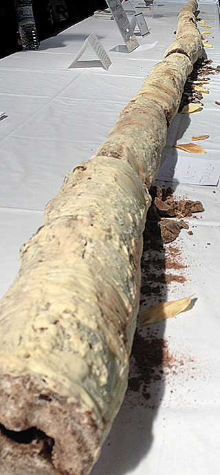 chocolate birch logs
