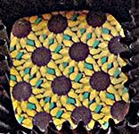 Kollar Sunflower